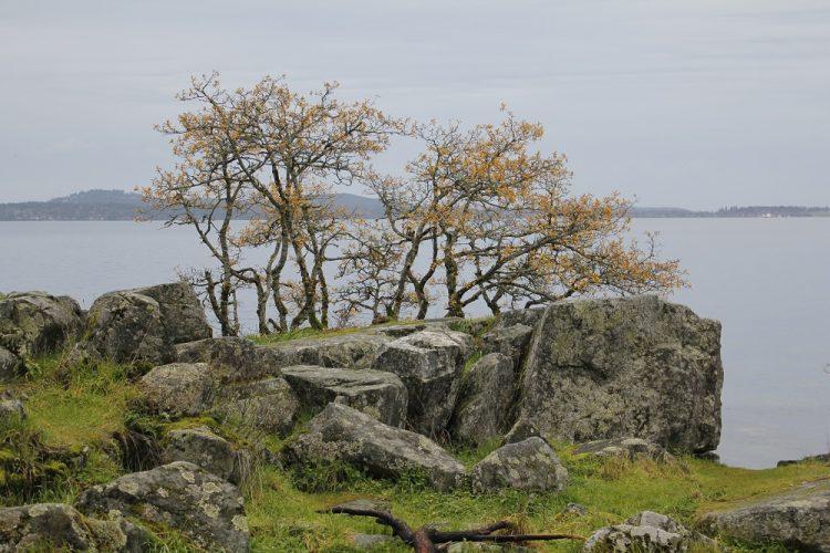 Mill Bay, Eco Tourism