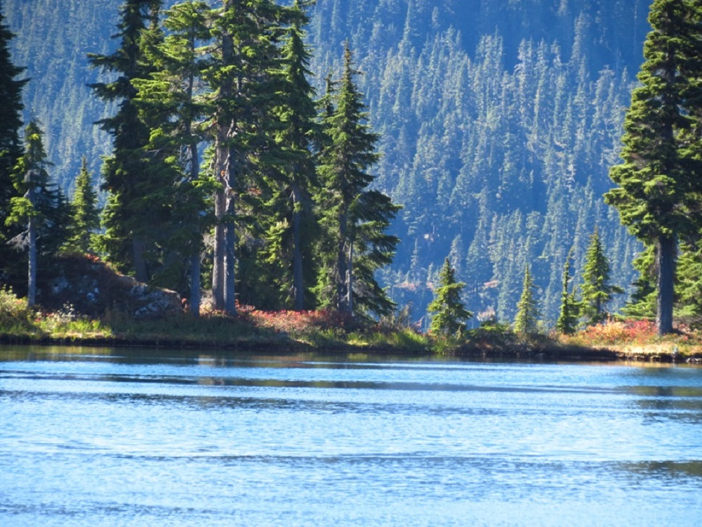 Strathcona Park Is Located Just Outside Of Campbell River, BC