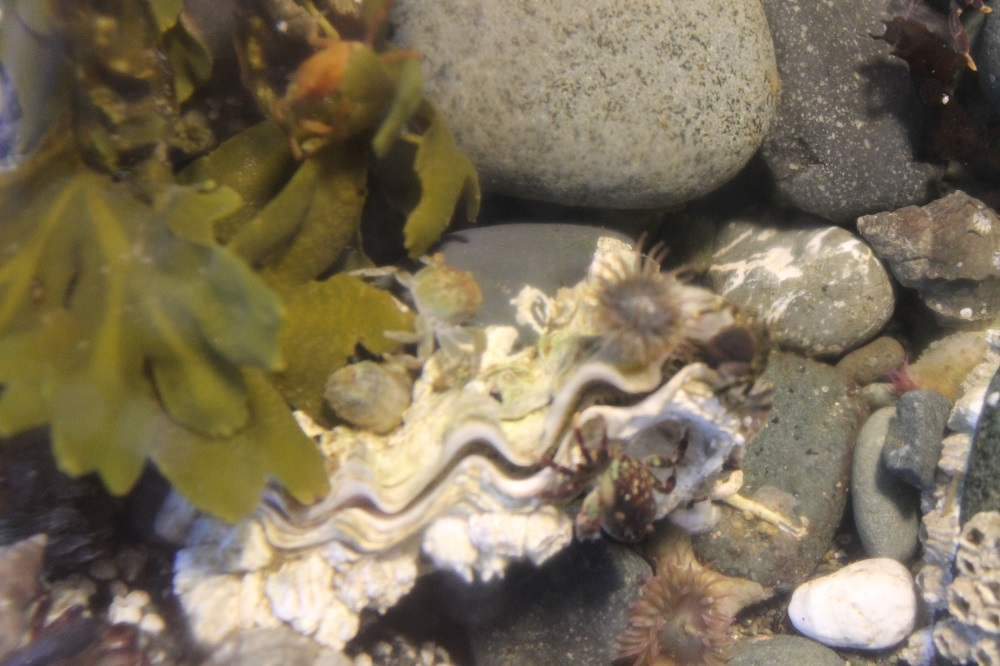 Pacific Oysters change sex at some point during their life, usually spawning first as a male and subsequently as a female.