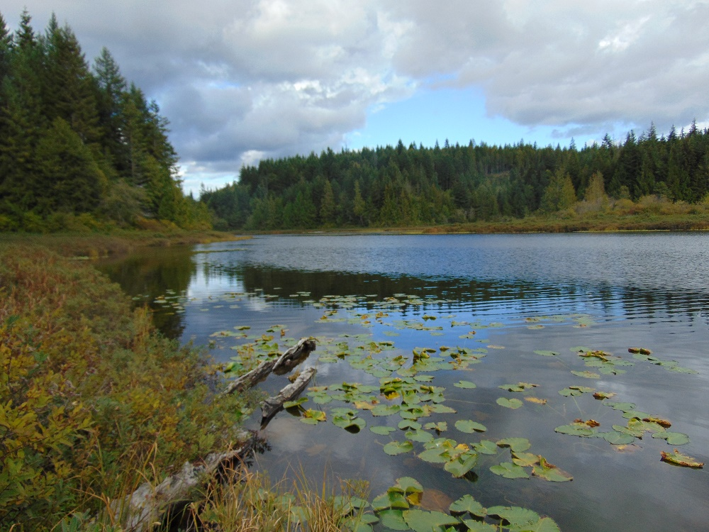 Middle Quinsam Lake, Vancouver Island, Pacific Northwest