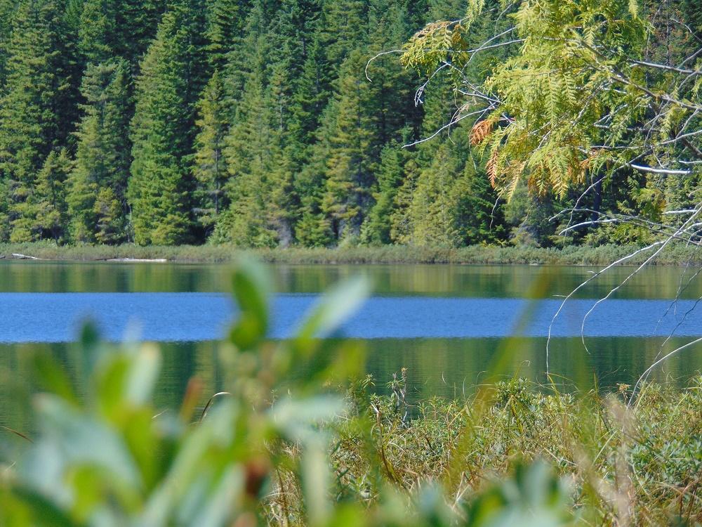 Reginald Lake,Vancouver Island, Pacific Northwest