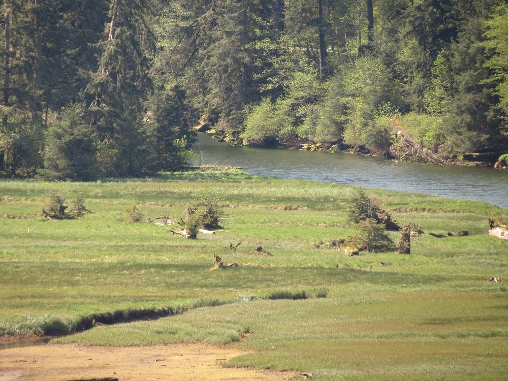 Colonial Creek Estuary, Pacific Northwest
