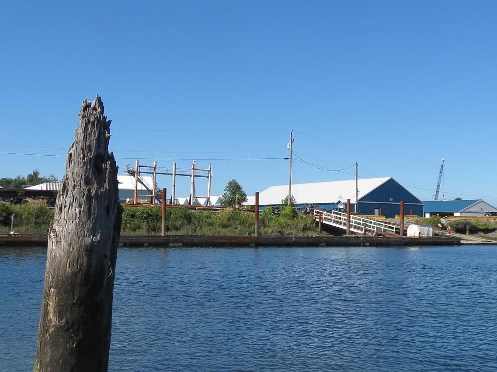 Campbell River Estuary, Vancouver Island, BC