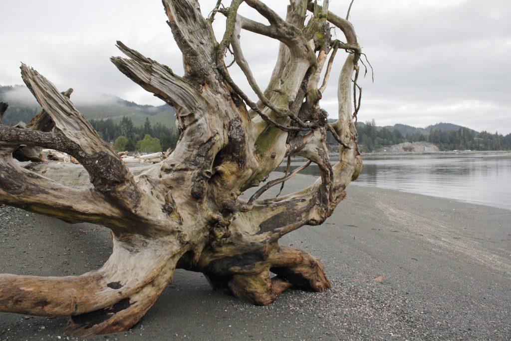 Pacheedaht Beach, Vancouver Island