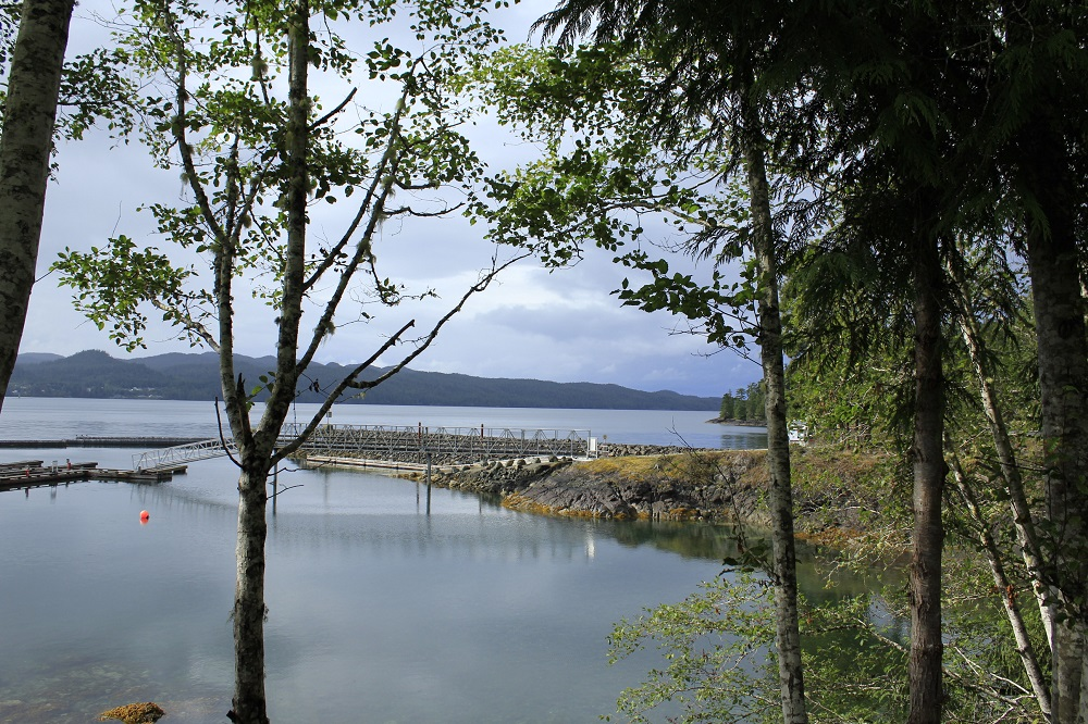 Bear Cove, Port Hardy, Vancouver Island, BC