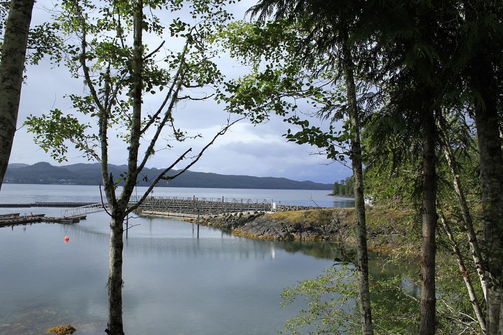 Bear Cove, Port Hardy, Vancouver Island, BC