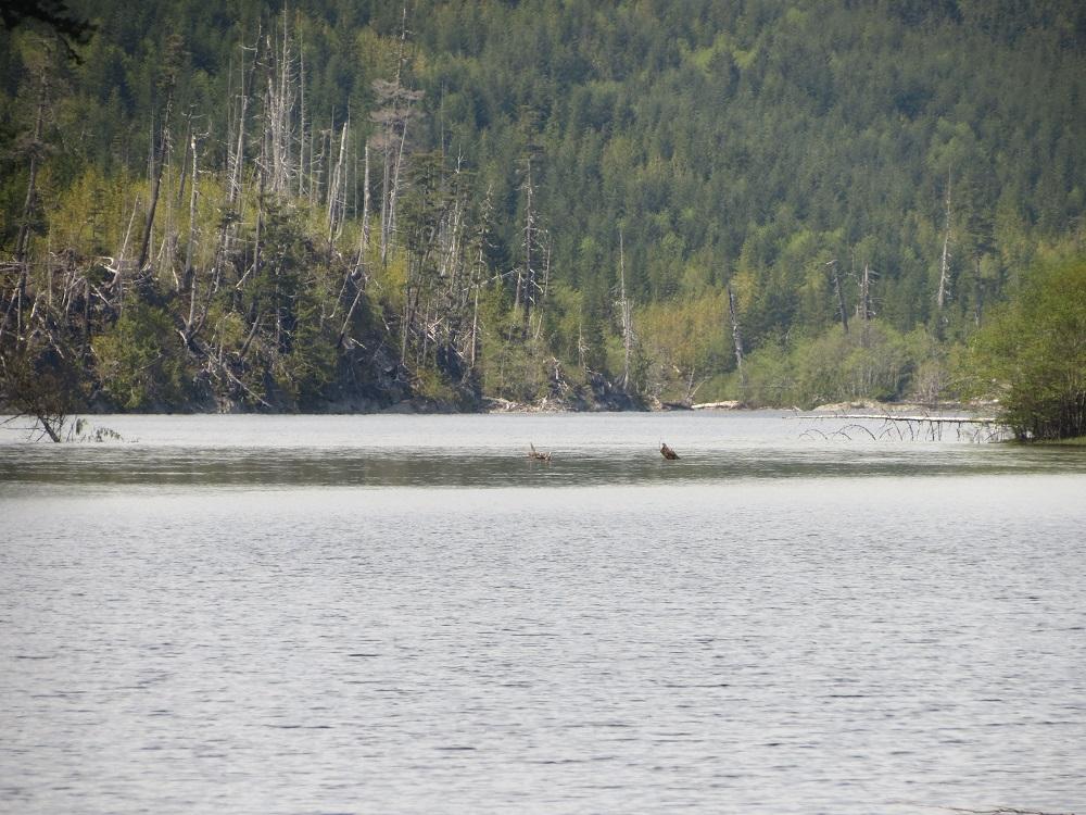 Benson Lake, Vancouver Island, BC