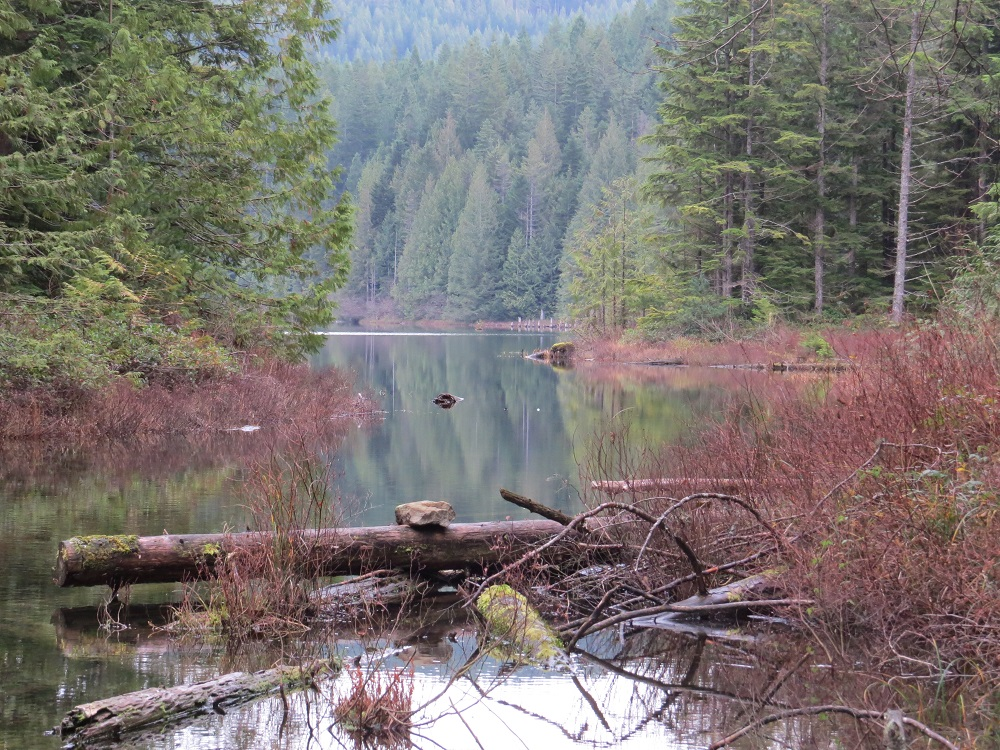 Blackwater Lake, Vancouver Island, Pacific Northwest