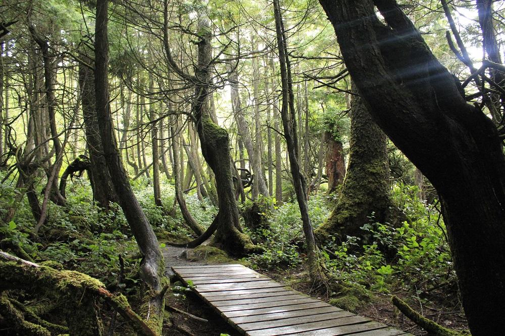 Botanical Beach Trail