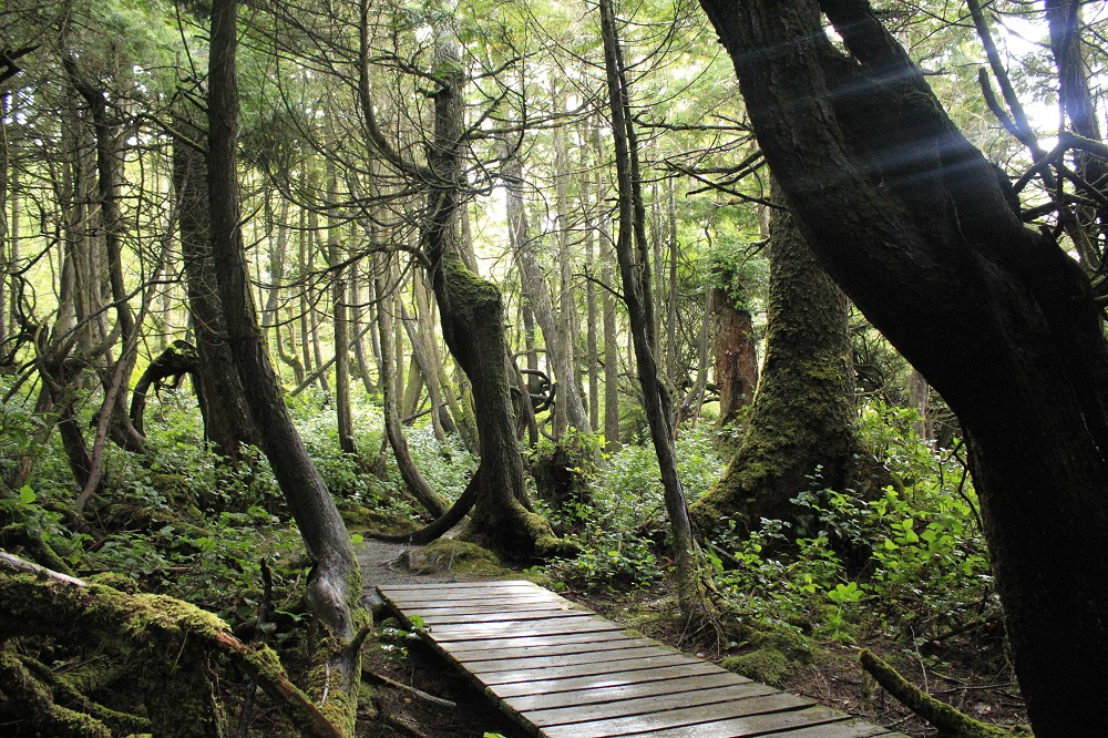 Botanical Beach Trail, Vancouver Island, Pacific Northwest