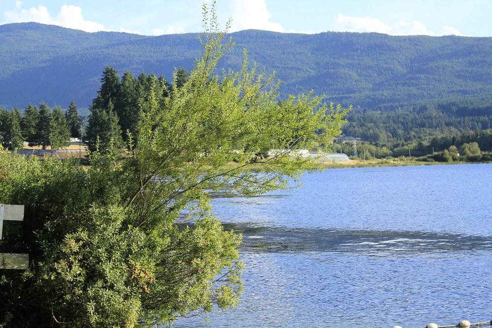 Brannen Lake
