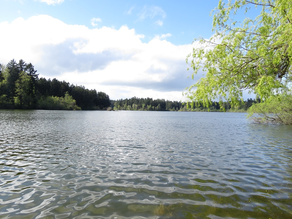 Elk & Beaver Lakes, Vancouver Island, Pacific Northwest