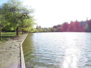 Elk & Beaver Lakes