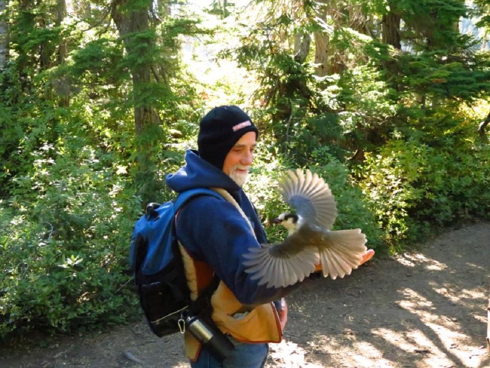 Gray Jays, Mariwood Lake, Vancouver Island, Pacific Northwest