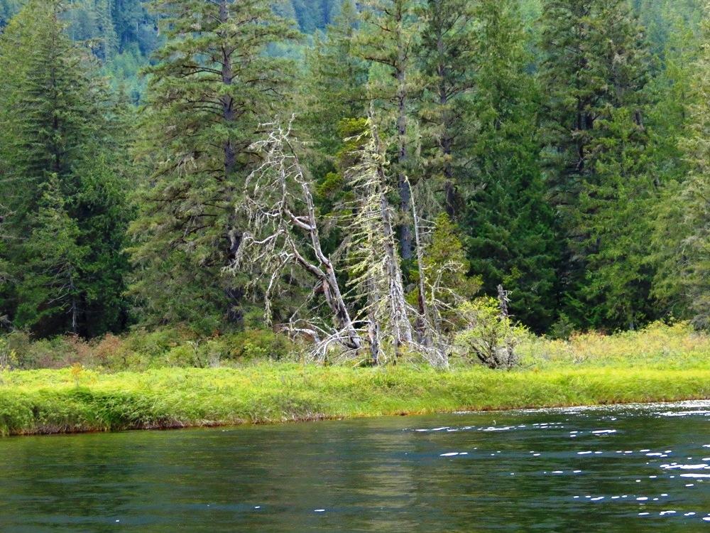 McCreight Lake