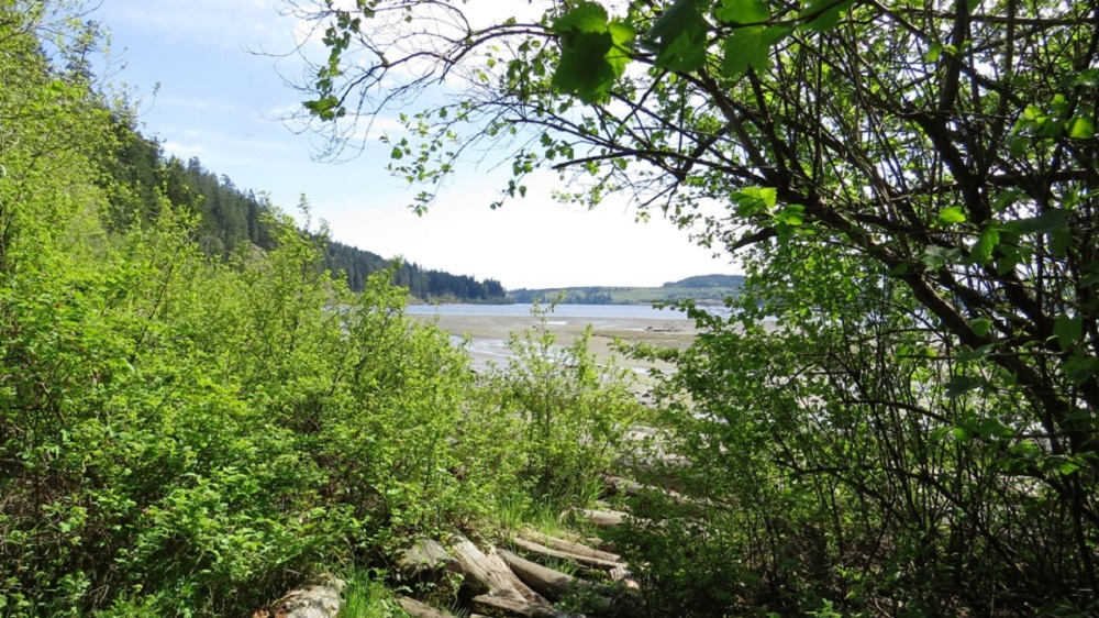 Menzies Bay, Vancouver Island, Pacific Northwest