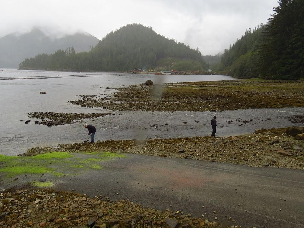 Nesook Bay