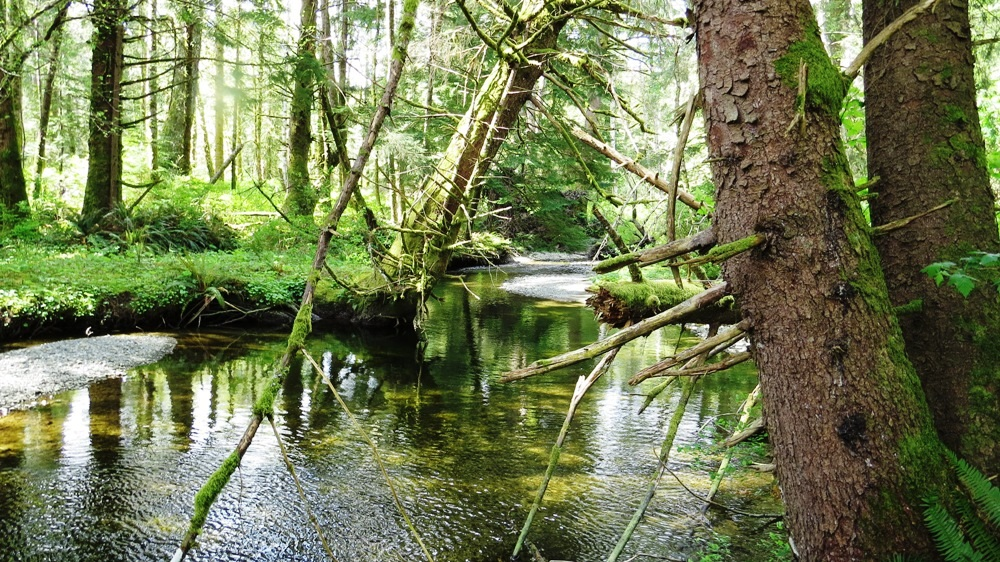 Menzies Creek Estuary, Pacific Northwest
