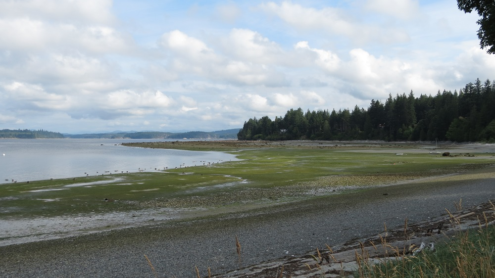 Smelt Bay, Vancouver Island, BC