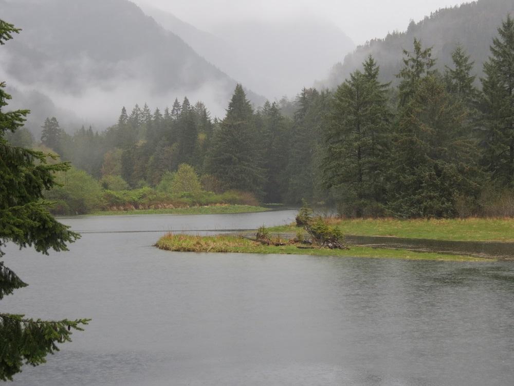 Gold River Estuary, Vancouver Island, BC