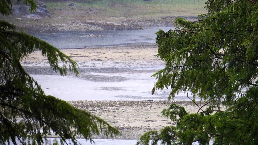 Nesook River Estuary