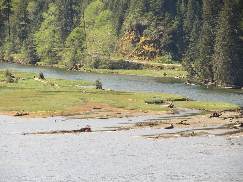 Colonial Creek Estuary