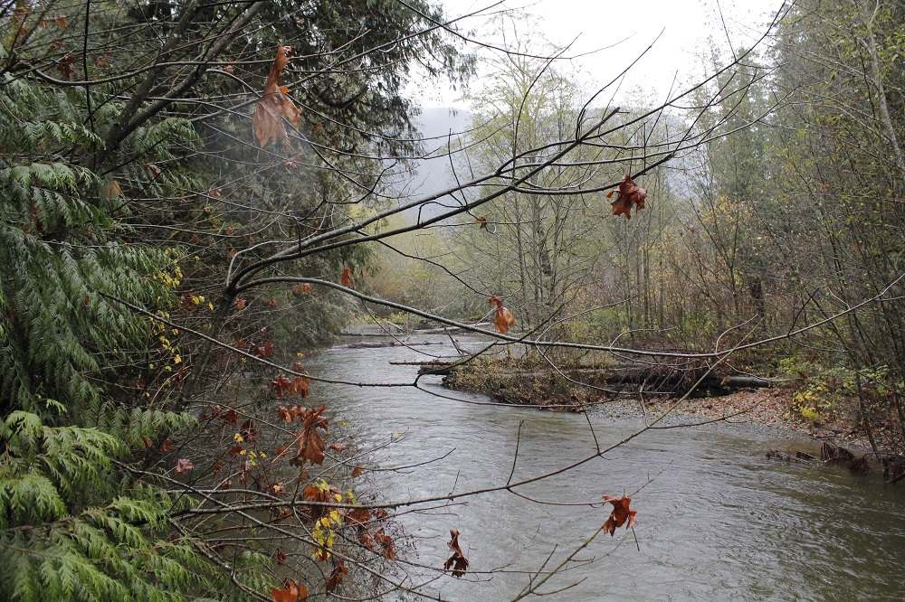 Cameron River