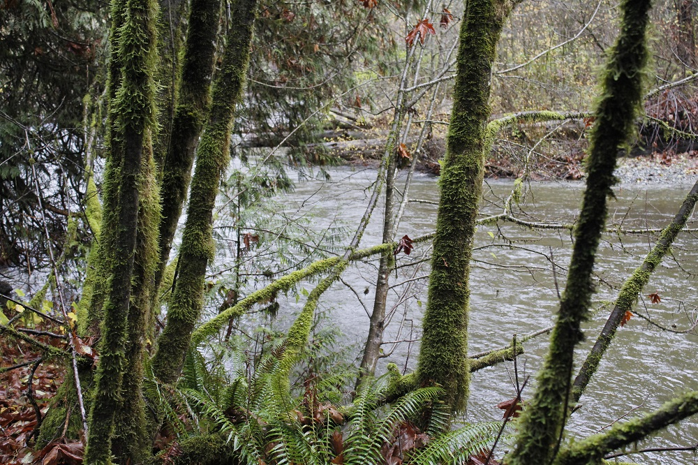 Cameron River, Vancouver Island, Pacific Northwest