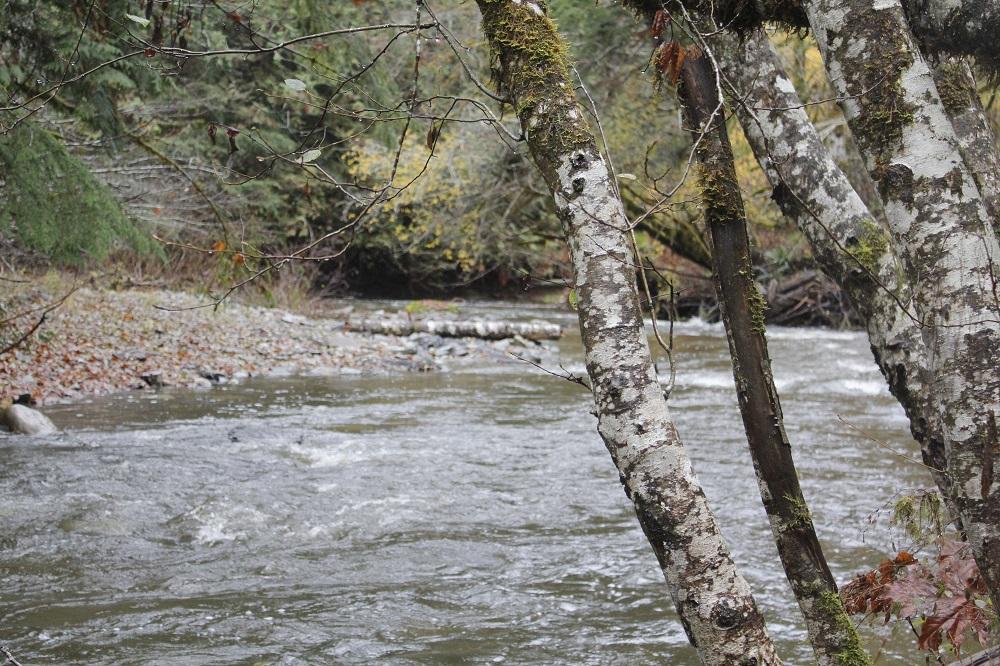 Rogers Creek