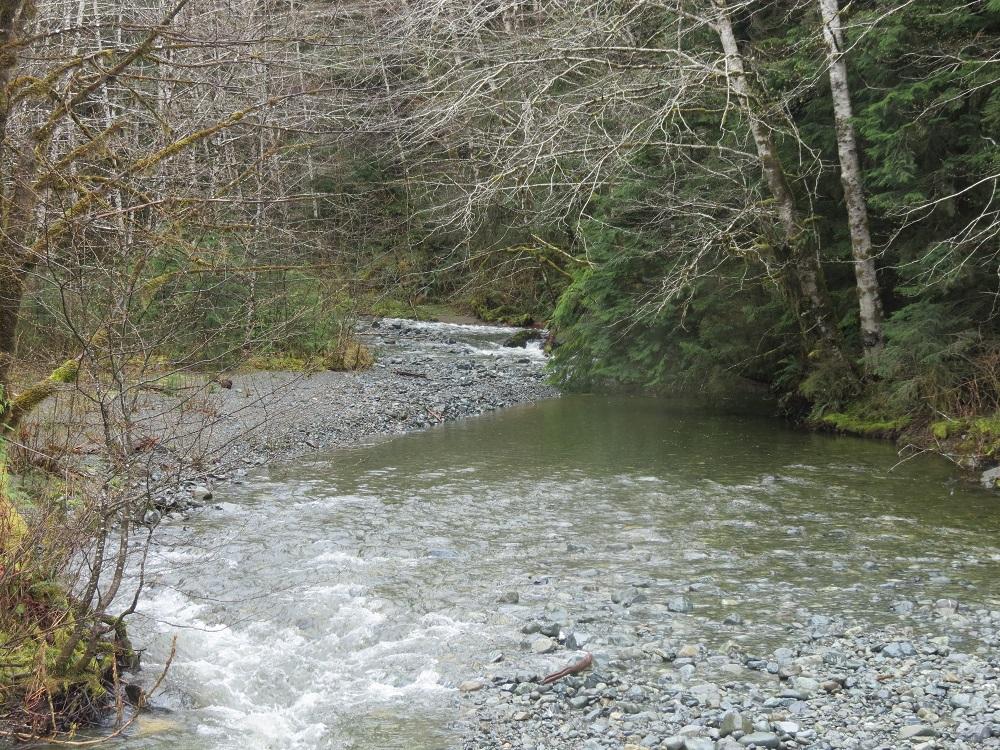 Adam River, Vancouver Island, Pacific Northwest