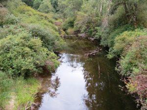 Amor De Cosmo Creek