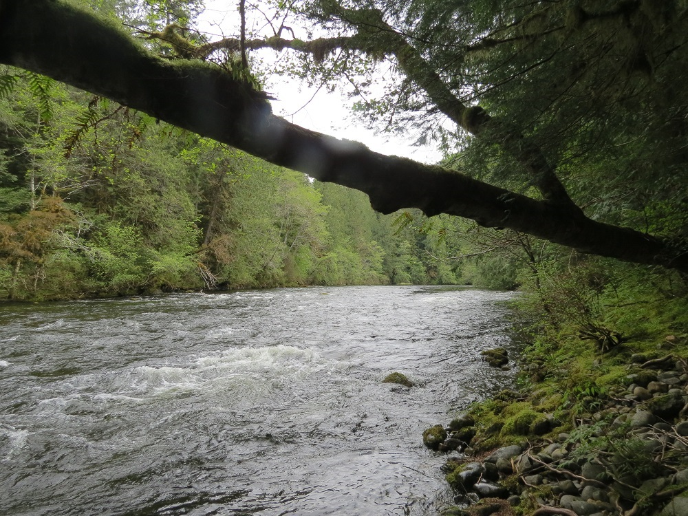 Bedwell River