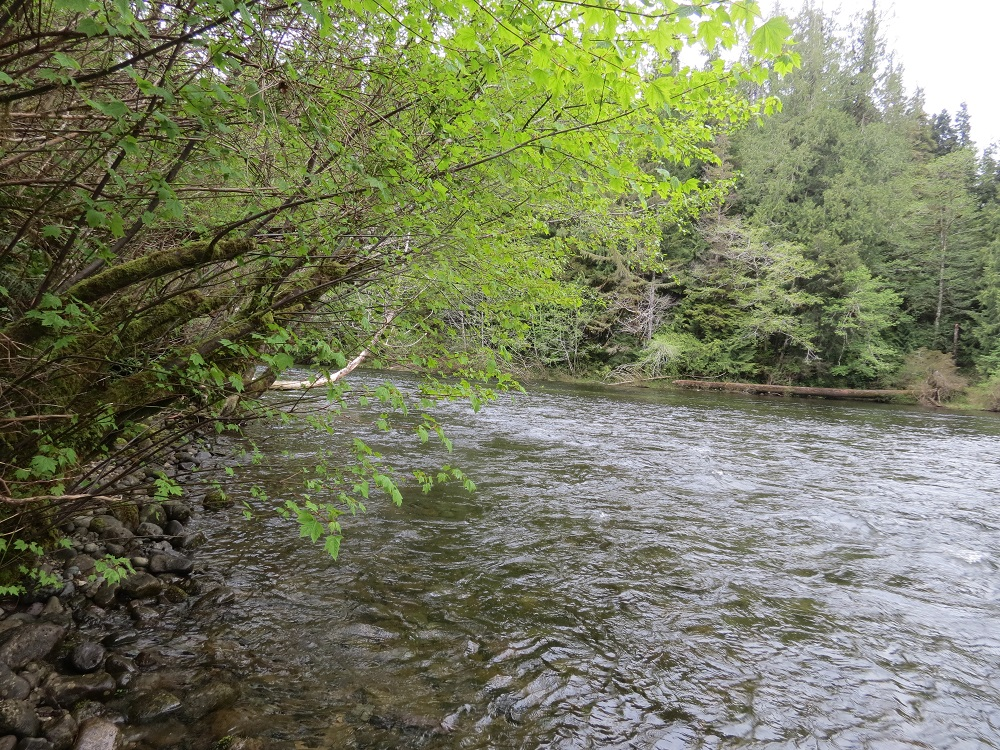 Bedwell River, Vancouver Island, Pacific Northwest