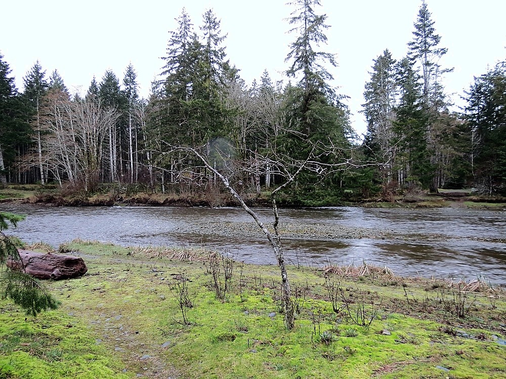 Black Creek, Vancouver Island, Pacific Northwest