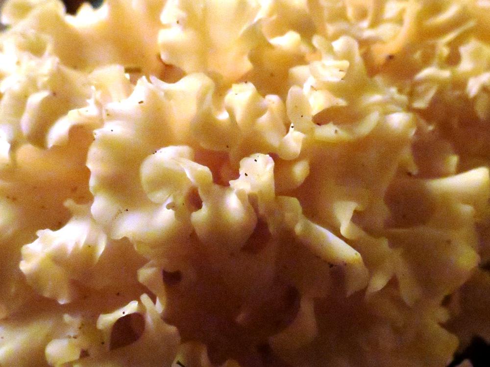 Cauliflower Mushroom, Edible Mushrooms, Pacific Northwest