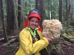 Cauliflower Mushroom Growing On Haida Gwaii