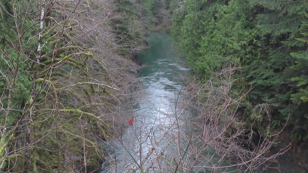 Caycuse River, Vancouver Island, Pacific Northwest