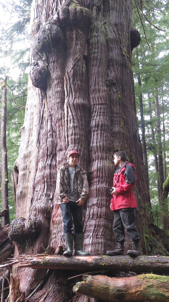 Cheewhat Cedar Tree, Big Trees, Trees, Pacific Northwest