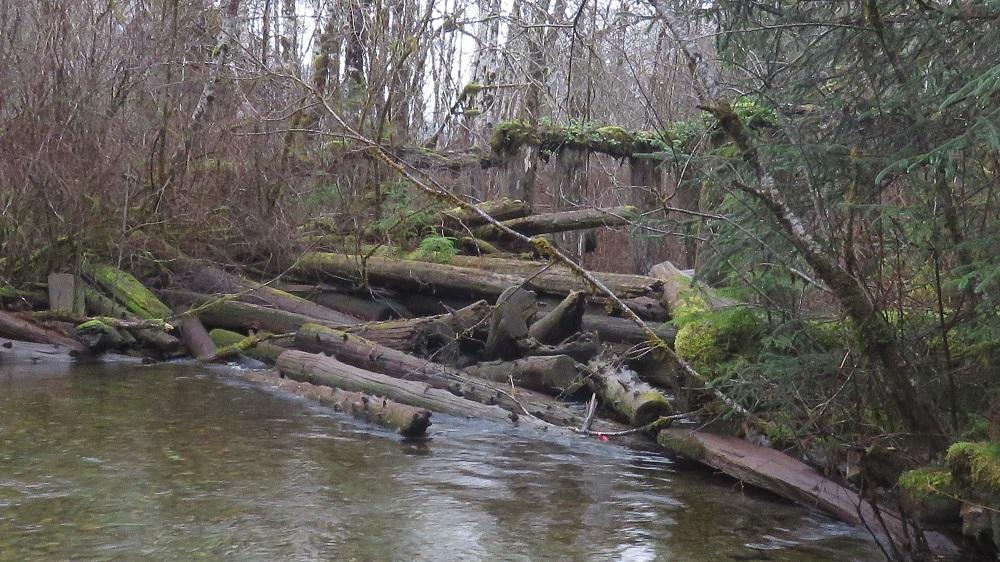 Coleman Creek
