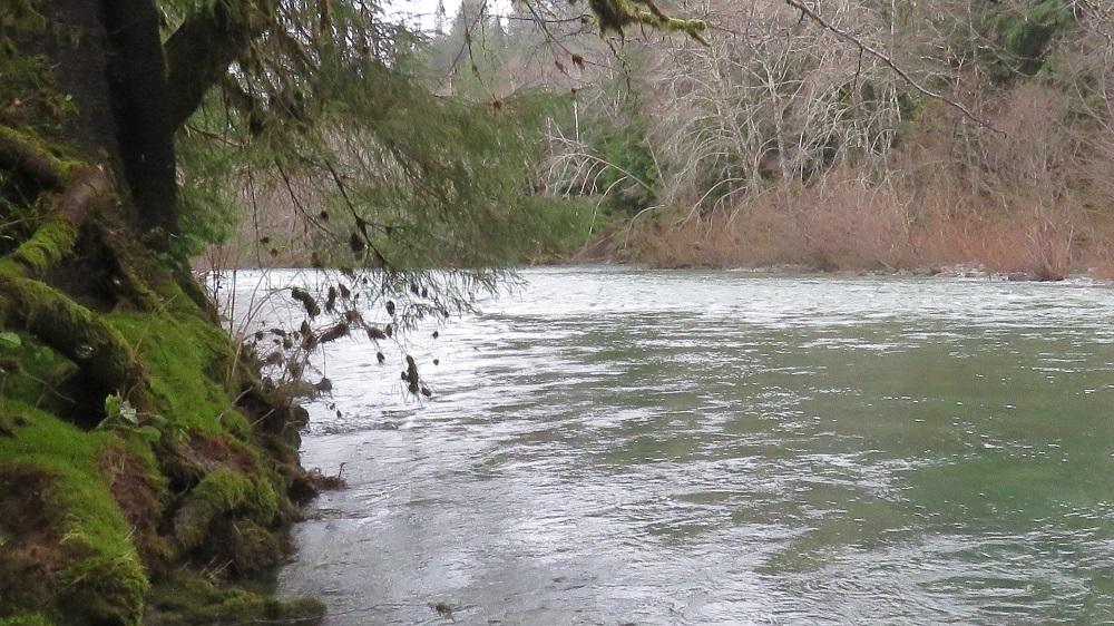 Coleman Creek, Vancouver Island, Pacific Northwest