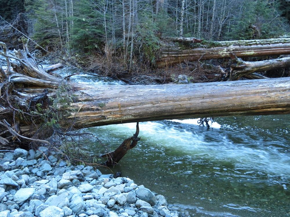 Consort Creek, Vancouver Island, Pacific Northwest