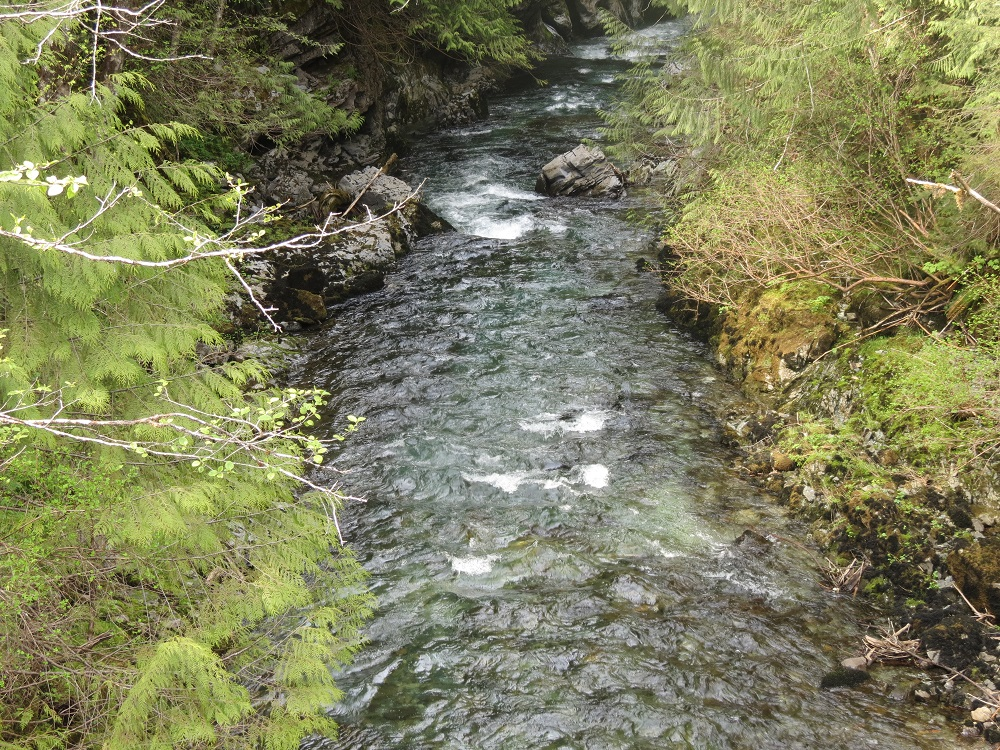 Davie River, Vancouver Island, Pacific Northwest