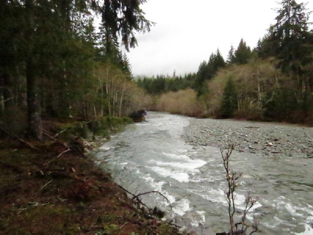 Elk River, Vancouver Island, Pacific Northwest