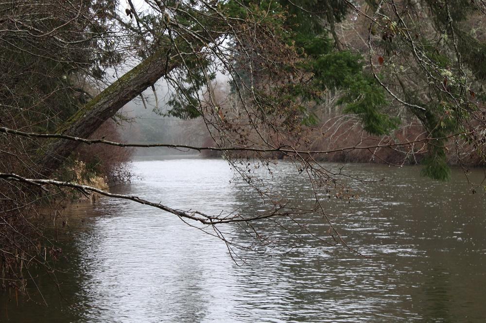 Englishman River, Vancouver Island, BC