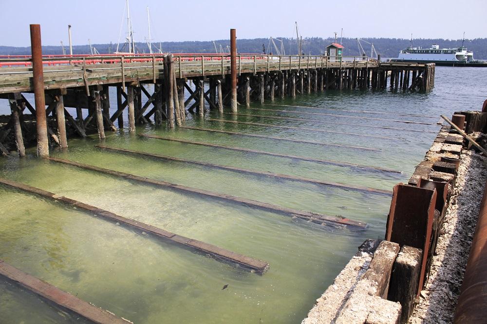 Fanny Bay Harbor, Vancouver Island, Pacific Northwest