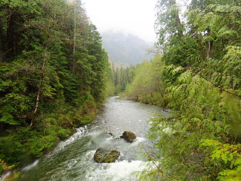 Leiner River, Vancouver Island, Pacific Northwest