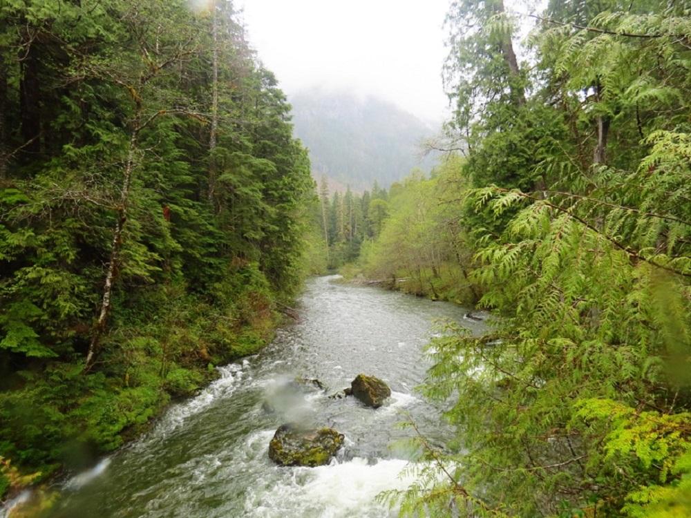 Leiner River
