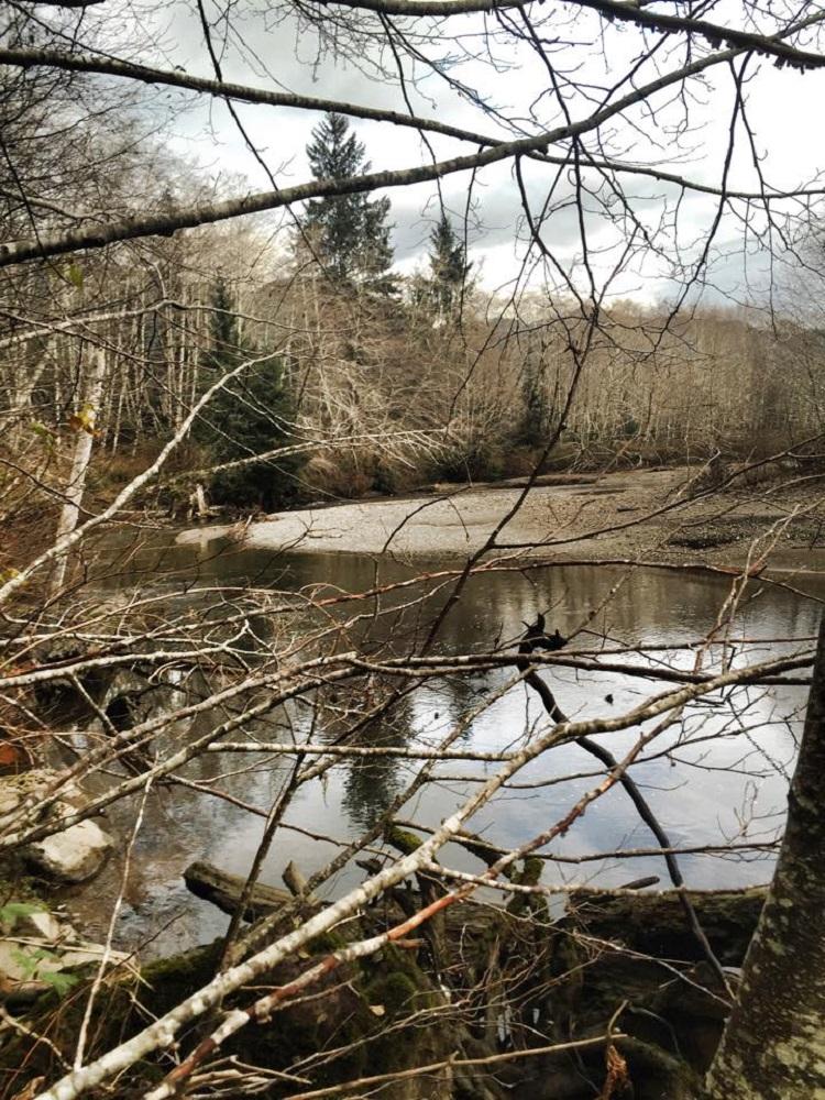 Mahatta River, Vancouver Island, Pacific Northwest
