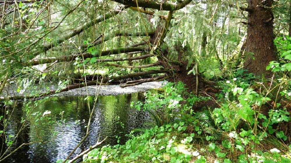 Menzies Creek, Vancouver Island, BC