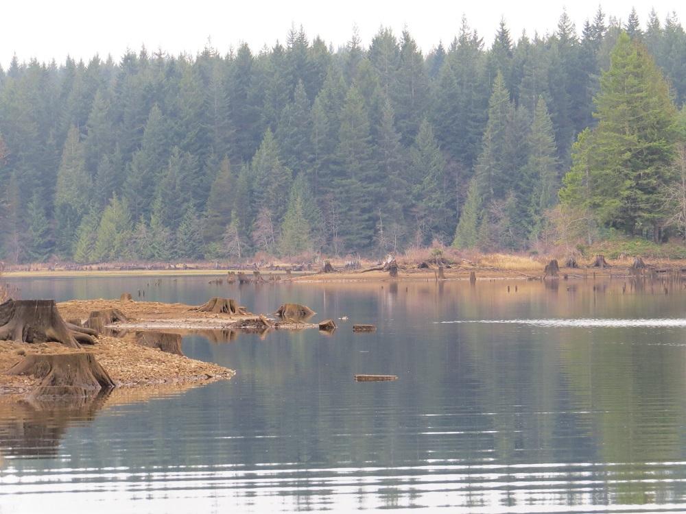 Miller Creek, Vancouver Island, Pacific Northwest